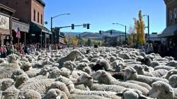 Main Street Ketchum turns into a wall of wool during the Trail of the Sheep Festival.