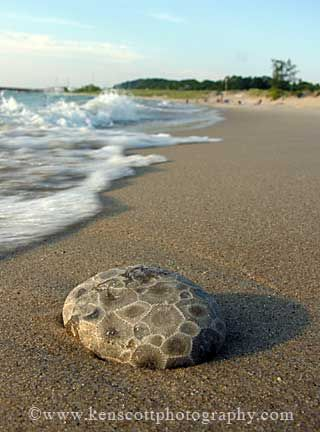 Petoskey Stone ... on the beach of Lake Michigan. Our state stone
