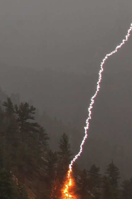 "Lightning strikes pine tree by bill.bryant99 on Flickr. ""I managed to catch this lightning strike on a pine tree last night. Fortunately, there was heavy rain at the time, so the fire was extinguished immediately."" Golden, Colorado, US."