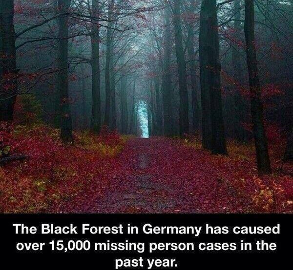 """I am pinning because this picture is so cool. I see the trees, and the caption under it, and think, """"This is a terrifying forest!"""" But look closer. It has so much beauty! The crimson leaves that have made a thick blanket on the ground. The way the fog hazily floats among the treetops. This forest is going into my book!!!"""