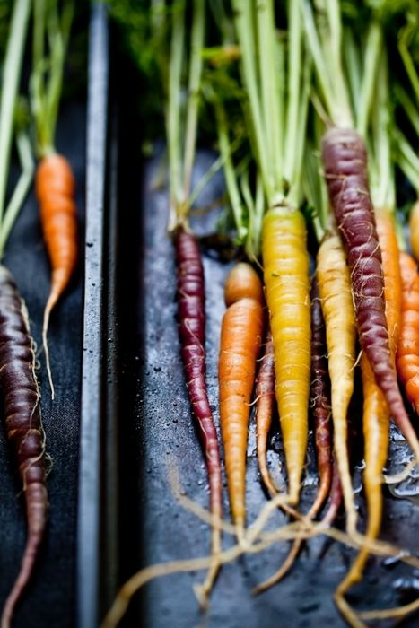 i dream of growing carrots like these.