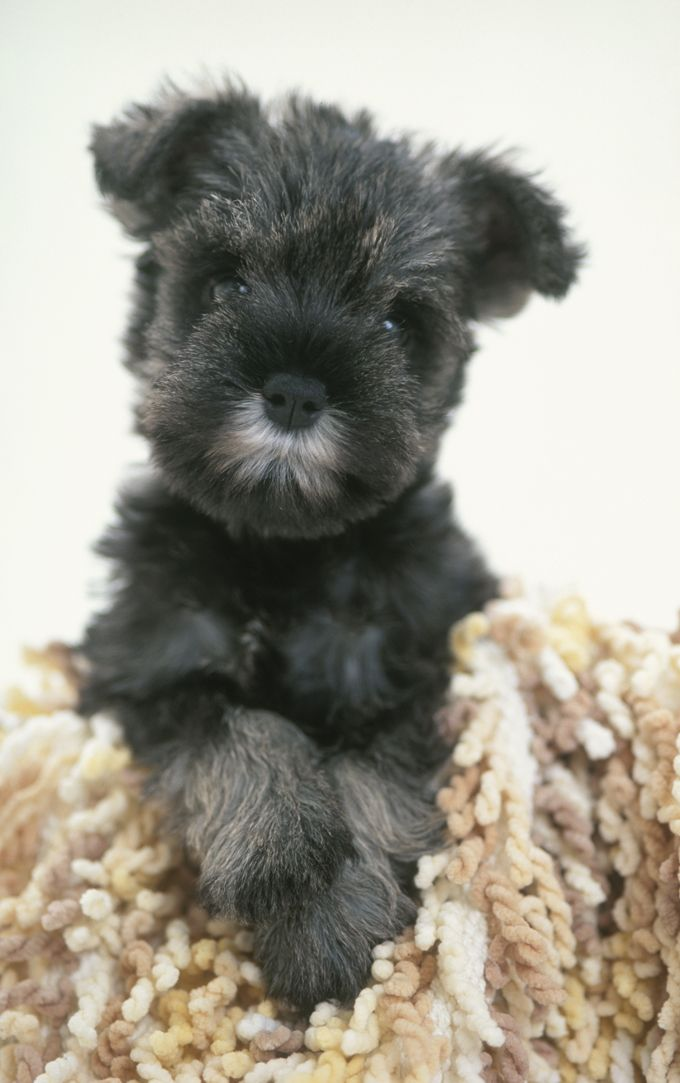 Best Type Of Small Dog For Ptsd Servive