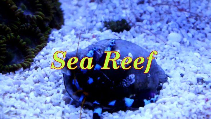 Sea reef часть 4