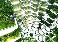 High-rise Hydroponic Farm