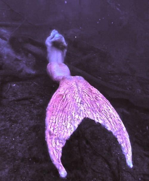 Fairy Mystical