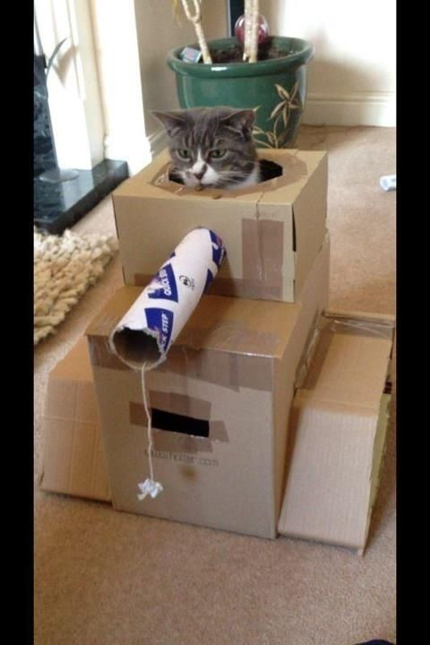 Best Cardboard Houses Images On Pinterest Cardboard Cat House - This company makes cardboard tanks houses and planes for cats and theyre perfect
