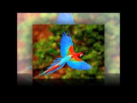 Birds in Flight Slideshow. Created by Peter S. Sakas DVM