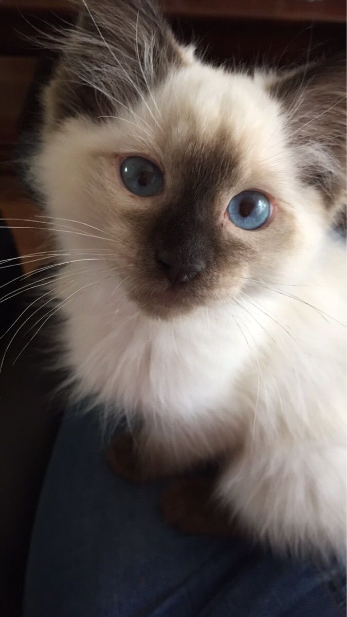 The most beautiful blue eyes, how can anyone say no to this face! http://cute-overload.tumblr.com
