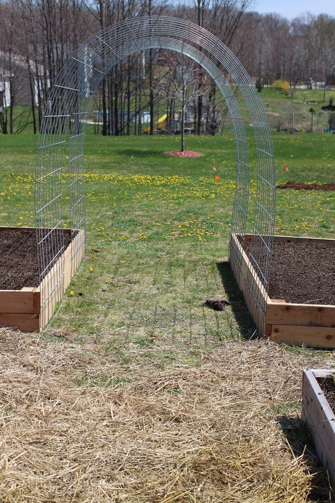 cattle panel trellis arches raised garden beds are ten feet long. I used two panels for each bed, leaving a gap in between. Cattle Panels (16′ x 50″) and Fence Staples