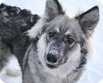 #MANITOBA ~ Shayla is a 1yo Shepherd mix in need of a loving #adopter / #rescue at WINNIPEG ANIMAL SERVICES 1057 Logan Ave #Winnipeg MB R3E 3N8 winnipegpoundpuppies@gmail.com Ph 311 or 1-877-311-4WPG