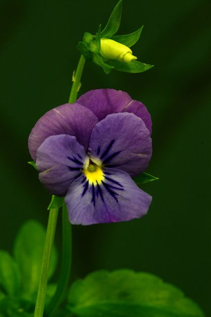 ...call those things which do not exist as though they did. [Romans 4:17] (Pansy)