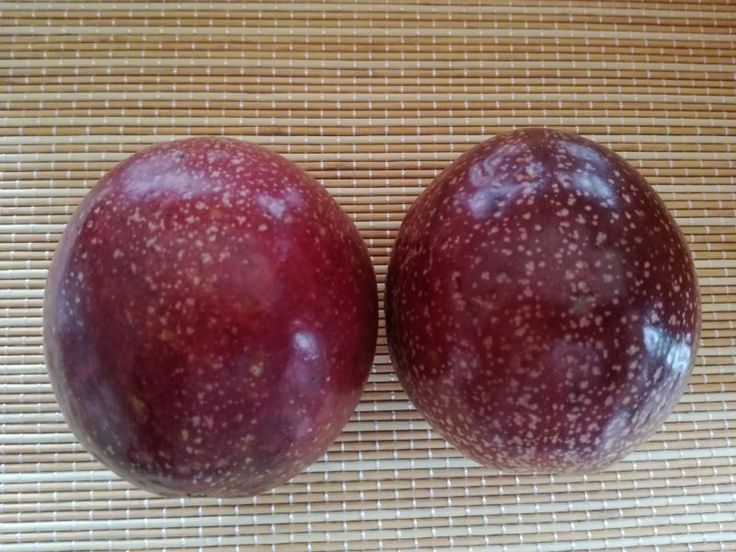 Passiflora edulis forma flavicarpa 'Panama Red'  http://myjunglegarden.com/2016/06/passiflora-panama-red/