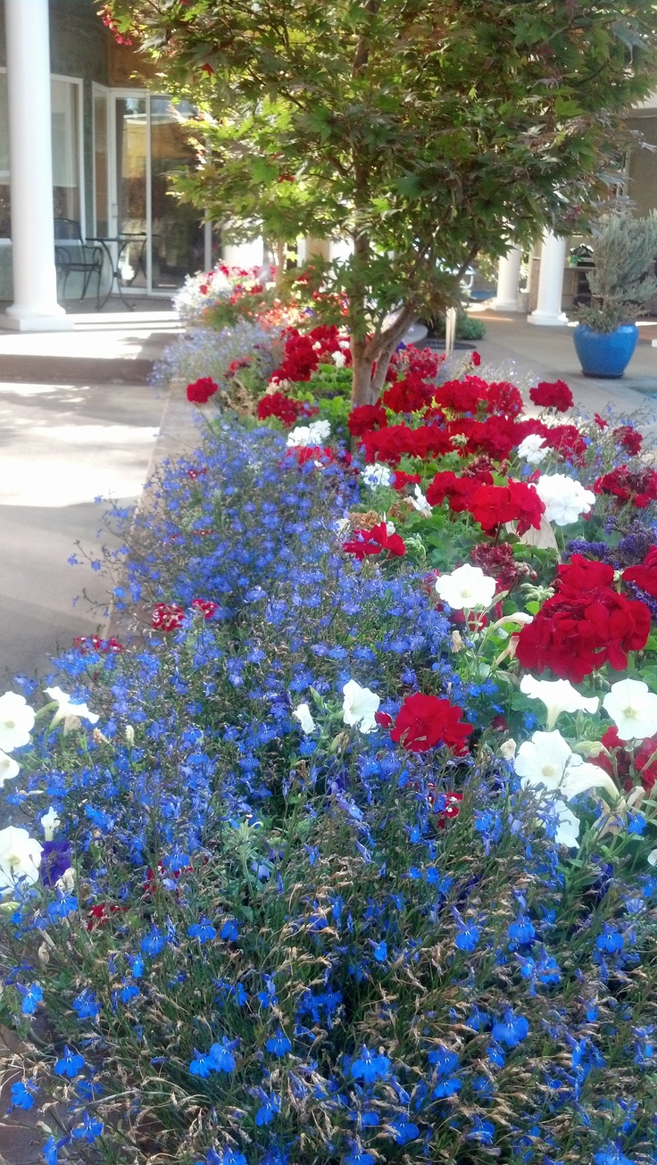 The 142 best red white blue flowers images on pinterest 2018 red white blue garden izmirmasajfo