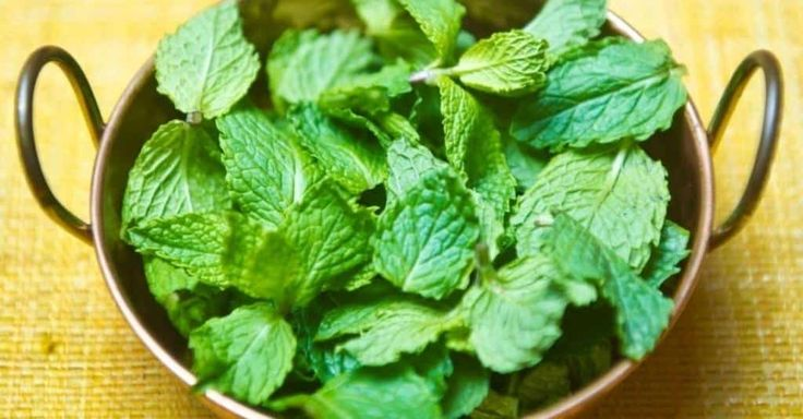 Incrível! Livre-se de ratos, formigas e aranhas em casa com uma receita simples utilizando só uma planta! - # #hortelã #repelentenatural