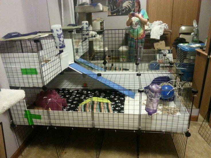 201 best images about guinea pigs bunny on pinterest for Coroplast guinea pig cage for sale