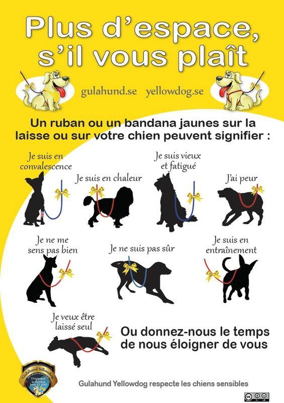DINOS: le ruban jaune pour les chiens qui ont besoin d'espace  - Page 9 Ef33d11d0a29d77e07c329492bb25584