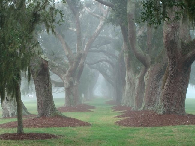 The Avenue of Oaks - St. Simons Island (Georgia)