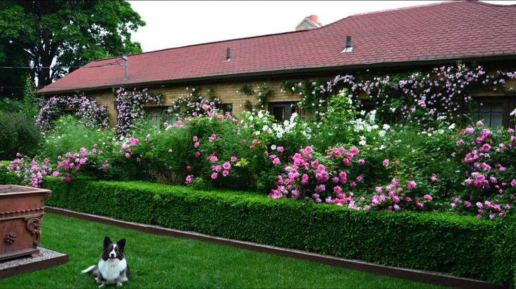 10 оригинальных способов создания живой изгороди во дворе частного дома