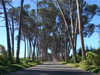 stock-footage-the-famous-avenue-of-trees-at-the-neethlingshof-wine-estate-near-stellenbosch-south-africa.jpg 400×300 pixels