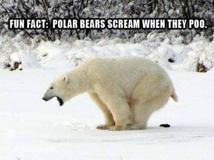 Best 25+ Facts About Polar Bears ideas on Pinterest | Facts about ...