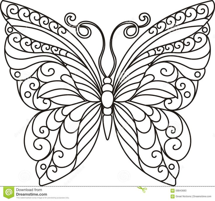 Stock Photos: BUTTERFLY OUTLINE. Image: 58843683