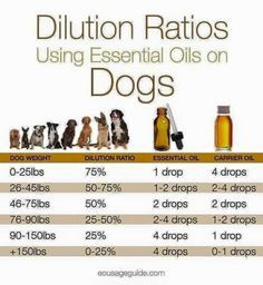 Essential oil dilution ratio for dogs- please also keep in mind your dog's sensitivity and the characteristics of the essential oil you are using. Even though our dog, Lizzy, is a 95 pound black lab, we always dilute her essential oils much more than this chart suggests.