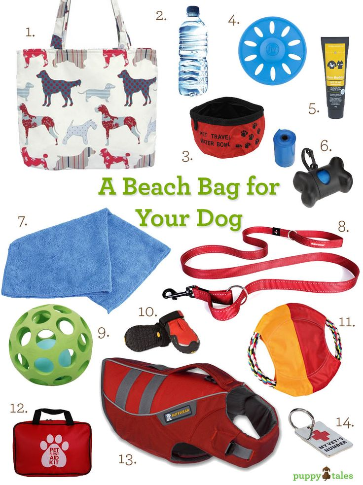 A beach bag for your Dog