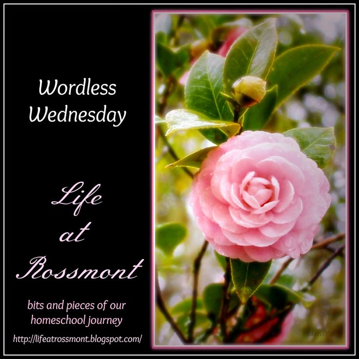 Life at Rossmont: Wordless Wednesday