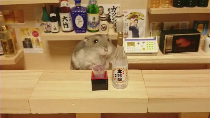 hamsters-bartenders-serving-tiny-food-and-drinks-14