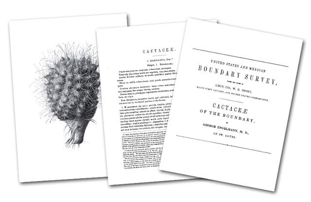 United States and Mexican Boundary Survey Cactaceae of the boundary, by Geaoge Engelmann, M. D.