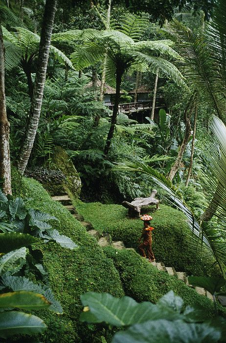 I would love to know the specific name of the plant growing on the ground. Bali Island