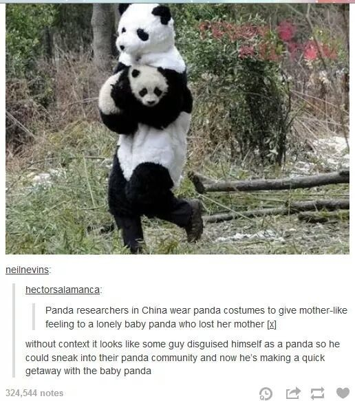 The panda escape. | 33 Tumblr Posts That Are Way Too Fucking Funny