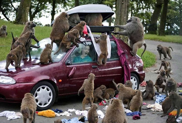 this is why I'm afraid of monkeys