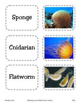 Here's a set of 30 Partner Picking Cards using Middle School/High School Science content. To make a pair, students will need to find the phylum and the animal that go together. These work great as a quick, easy way to randomly pair up students for a task or activity. *These also work great as a matching game for a center or early-finishers.