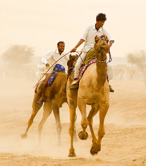 camel race - i want to do that.