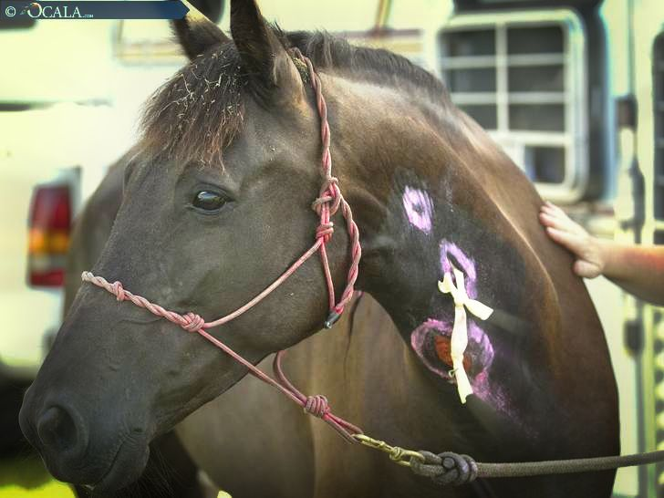 Update: Friends Help Raise Funds for Florida Gasoline-Injected Horse | Straight from the Horse's Heart