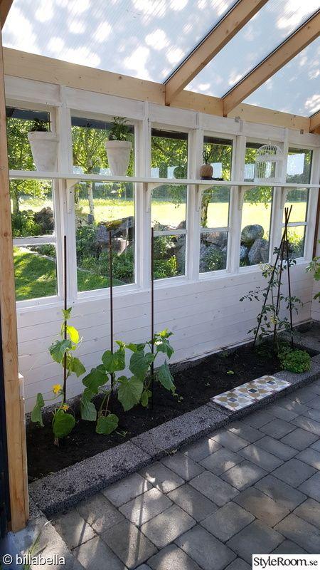 trädgård,växthus,gurka,gamla fönster,gör det själv