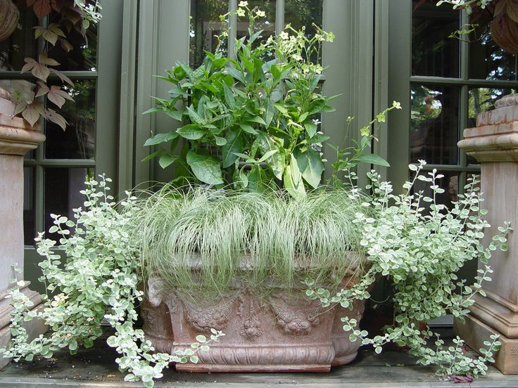 117 best green container plantings images on pinterest container nicotiana and grass workwithnaturefo