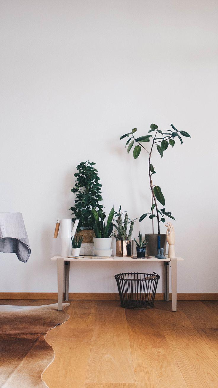 Die passende Pflanzenbank: Eine Bank voller Sukkulenten und Lieblingspflanzen kann in fast jedem Raum ein Zuhause finden. Was ihr benötigt: Tolle Möbelbeine, eine Möbelplatte, Kakteen, Efeu & Co. Etwas Dekoration schadet auch nicht.