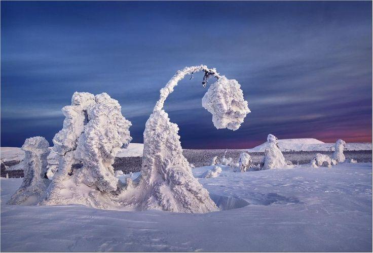 Когда зацветают тюльпаны.... В горы зима приходит рано. Когда внизу, на равнине еще во всю хозяйничает унылая, серая осень, здесь уже совсем иная картина. Именно в это время начинают преображаться горы. На древних курумах начинают расцветать настоящие снежные розы, а на склонах хребтов распускаются огромные снежные тюльпаны...    Северный Урал. Главный Уральский хребет. Декабрь 2011 г.Photographer: Бродяга с севера