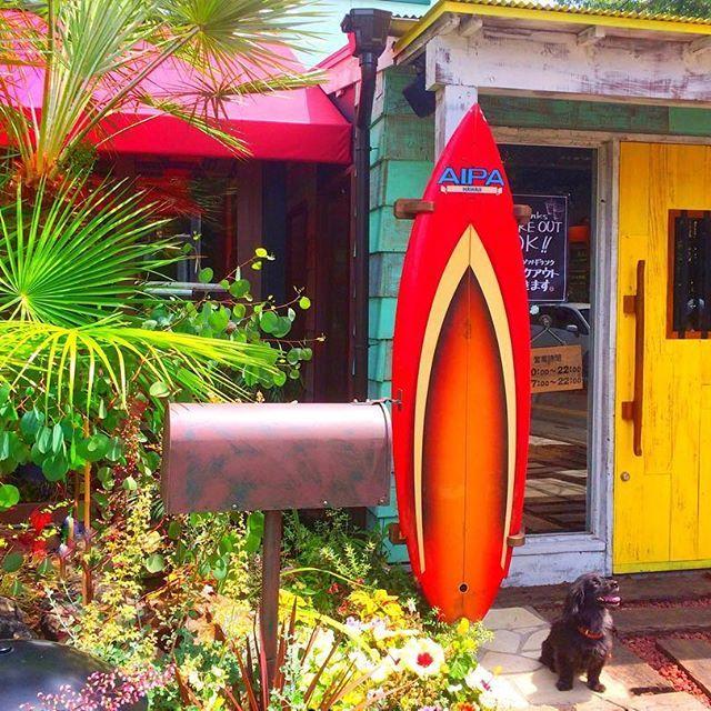 2017/06/01 * ☕️Kona's Coffee🌴🏄♀️ * with愛犬くぅちゃん🐶❤️📸 * * #japan#saitama#konascoffee#cafe #lunch#sunnyday#hawaiian#surf #dog#dogs#pet#instalike #olympus#olympustough#tg870 #l4l#like4like#instagood#genic_mag #日本#カフェ#ランチ#愛犬#ペット#犬 #コナズ珈琲#サーフ#ハワイアン#オリンパス