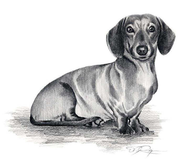 осенью рисунки такса собака сахарову докладываем