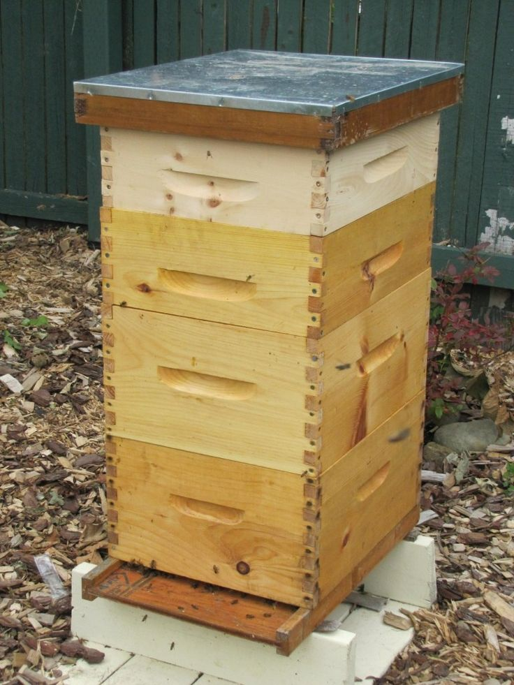 Assembling My First Beehive | Bee hive, Building a beehive ...