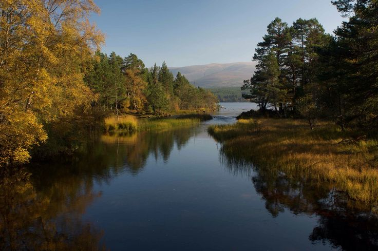 Autumn colour lining the flow into Loch Morlich