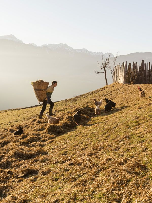 Farmlife in late winter - South Tyrol at Roter Hahn farms