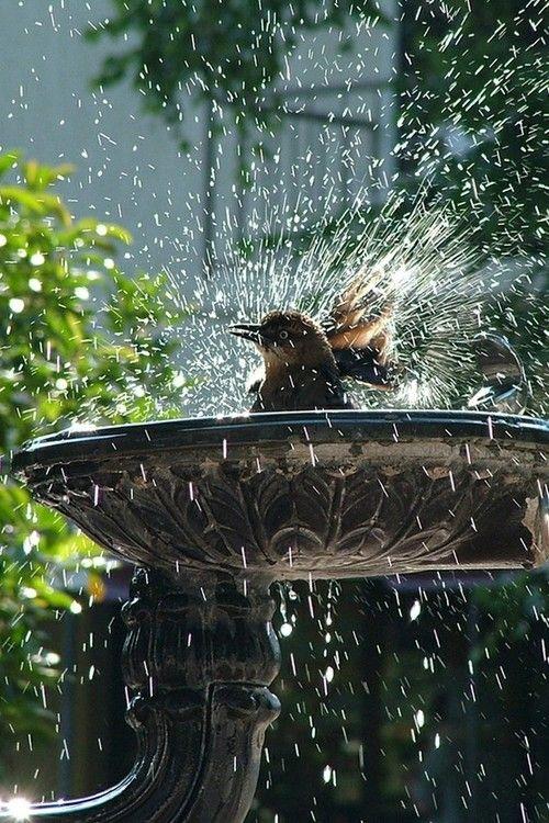 One of the reasons why I love having a birdbath in my garden.