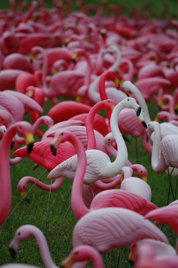 Flock Of Plastic Flamingoes At A Garden Center In Austin Texas Pink Flamingosplastic