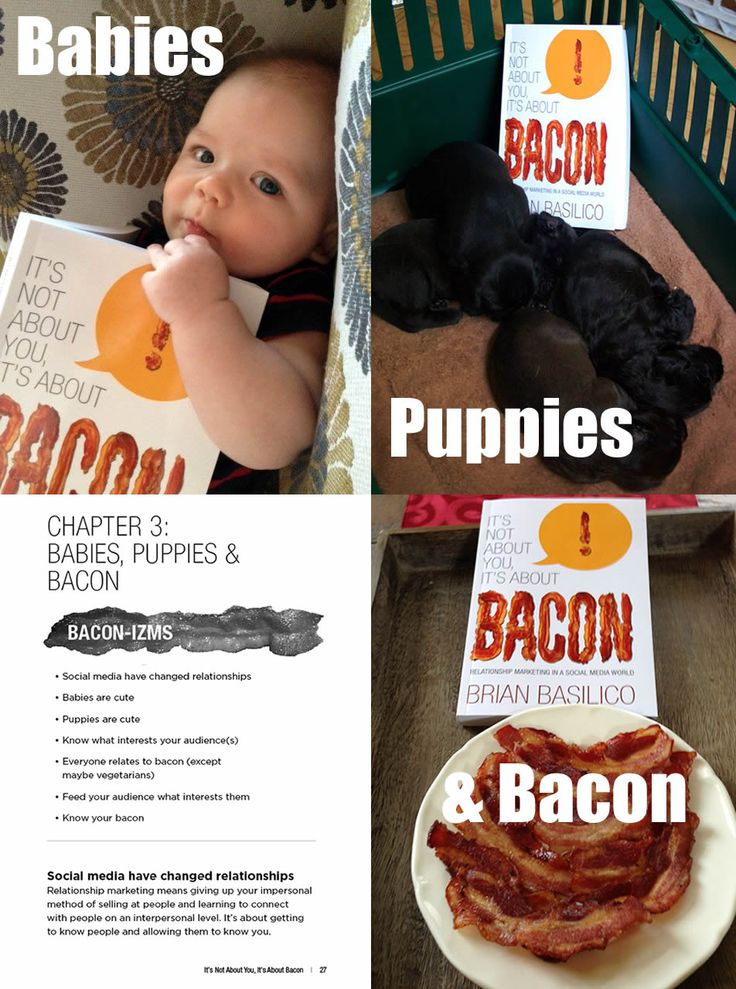 Chapter 3: Babies, Puppies & Bacon!