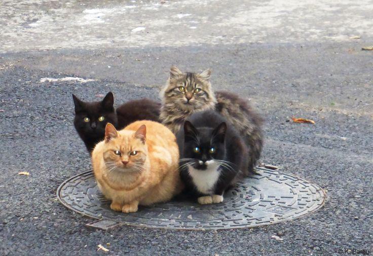Pisici in centrul Constanta