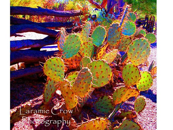 Southwest Desert Photography: Title - Prickly Pear in Rust and Gold, fine art, cactus, color study, stock, southwestern photograph